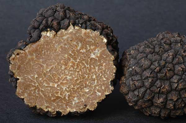 Image of a sliced Burgundy, or Summer, truffle (Tuber aestivum var. uncinatum)